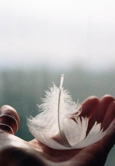 las plumas como señal de comunicación de tus ángeles