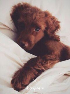 Soñar con perros – Significado de los sueños con perros
