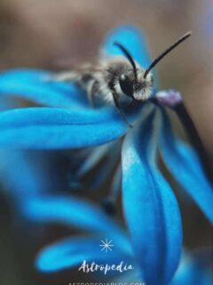 Lo que significa soñar con abejas ¿Dinero y Amor? – Todos los significados