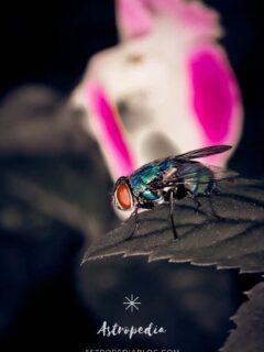 ¿Qué significa soñar con moscas? Interpretación y Simbolismo