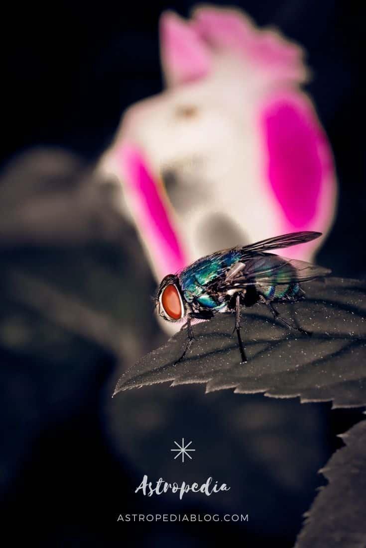 que significa soñar con moscas