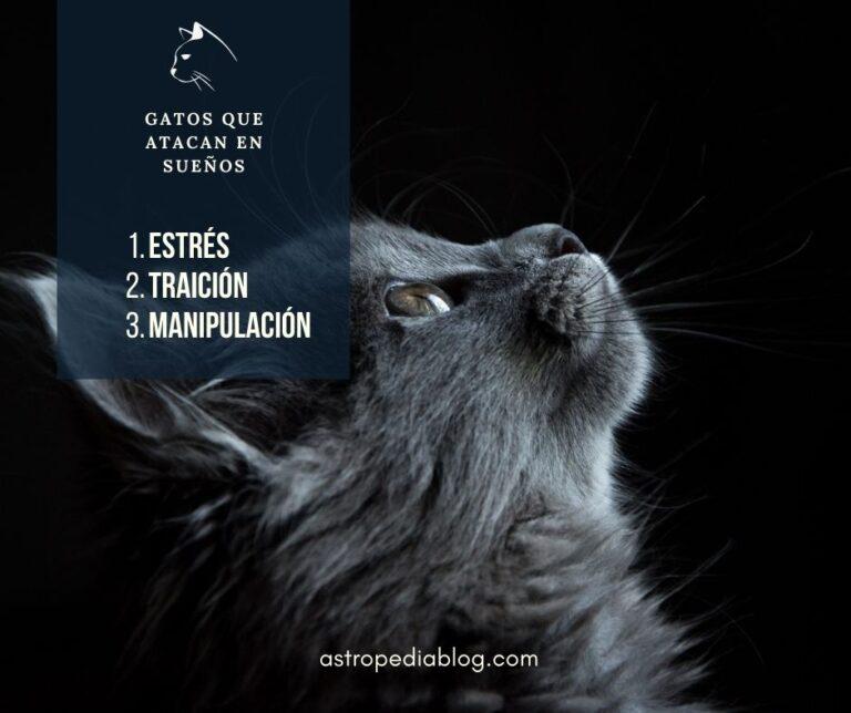significados de soñar con gatos que te atacan